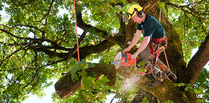 tree cutting service Wetumka