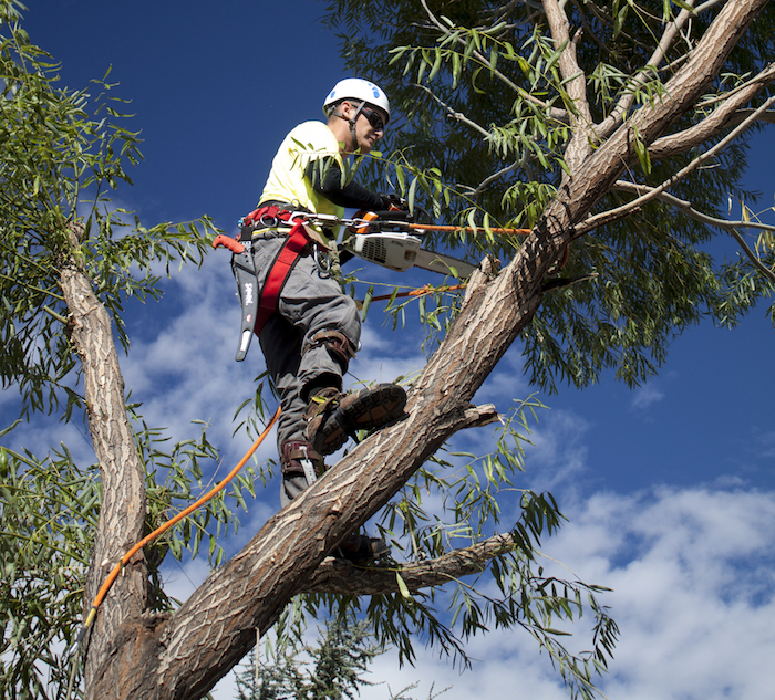 Tree Cutting Services By Tree Cutting Pros